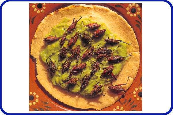 grasshoppertacos